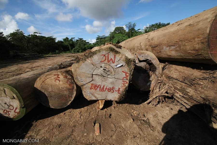 Empresa estadounidense reconoce haber comprado madera ilegal procedente de Perú